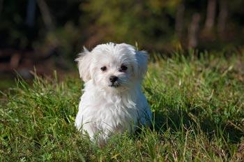 Hoe kies je een goede hondenschool?